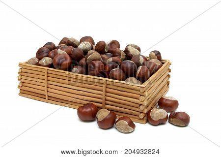 Mature fruit of chestnut isolated on white background. Horizontal photo.