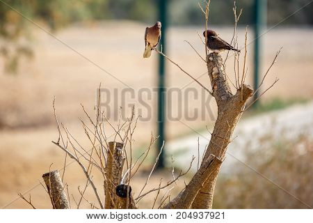 Two Turtledoves Sitting On A Tree