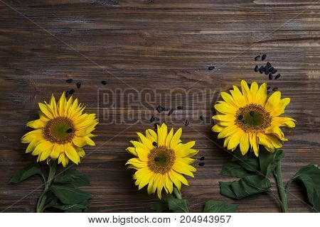 Autumn background with sunflowers and seeds on wooden board