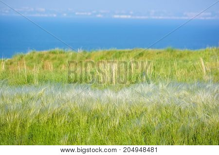 Field with wild feather grass on sunny day rural nature concept