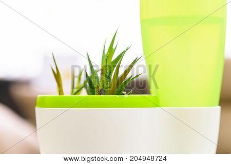 Closeup small domestic plant in modern white plastic pot
