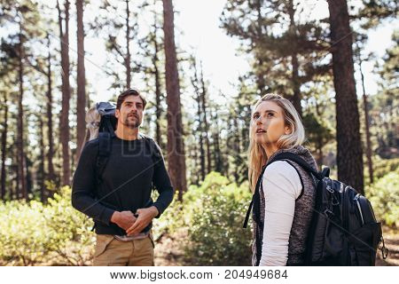 Hiker Couple Trekking In Forest