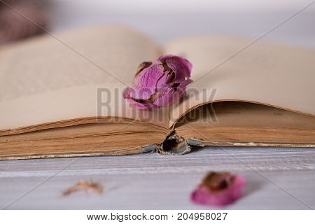 Dried flowers and book on wooden background