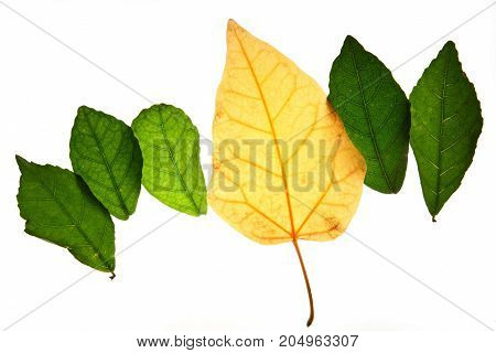 Creative layout of color autumn leavesconcept of change age skin and healthy