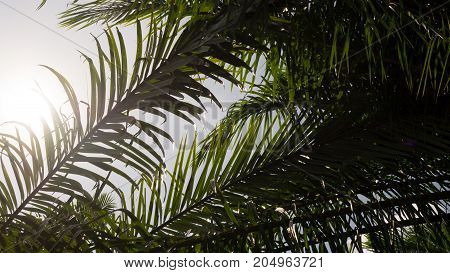 silhouette palm leaf branch tree with sun light in nature for background.