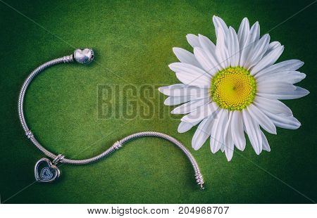 Silver bracelet and daisy flower on the green surface jewelry for women modern fashion precious products macro selective focus retro style