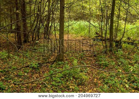 An old abandoned dirt road in a forest with sprouted trees