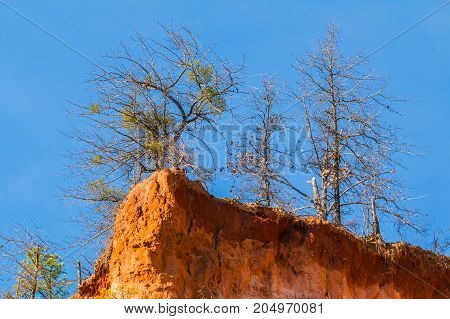Red loamy cliff of Providence Canyon with trees growing on it bottom view USA