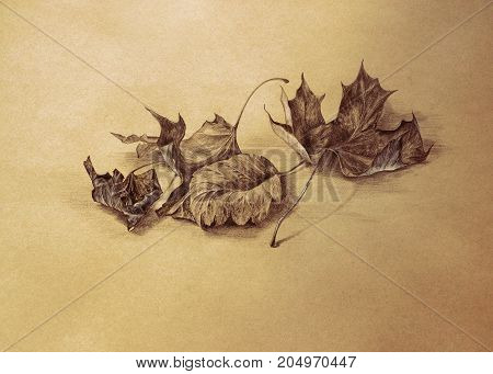 dry autumn leaves pencil drawing with paper texture - sepia toned fall season background