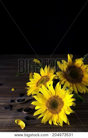 yellow sunflowers with seeds on background of old fence. copy space