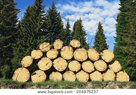 Pile of felled wood lying on the ground on the background of the taiga