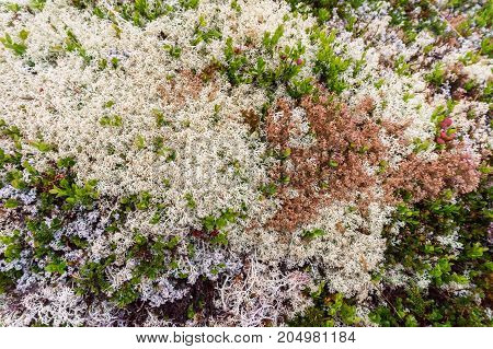 Multicolored moss in the mountains of Western Norway