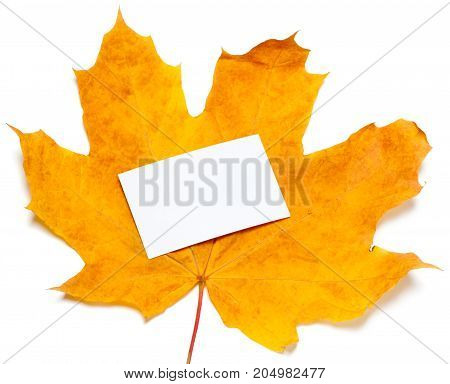 Autumn Yellow Maple-leaf With White Empty Price Card