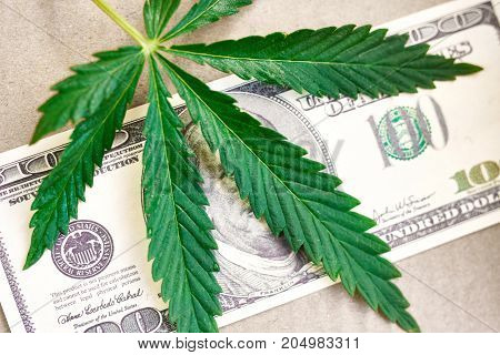 Money With Marijuana Leaf Close Up High Quality. Cannabis With Money Stock Photo