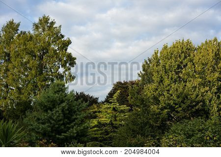 trees in park with cloudy sky background green leaves