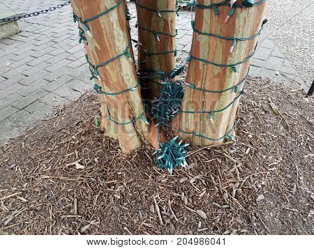 a tree trunk with lights wrapped around it
