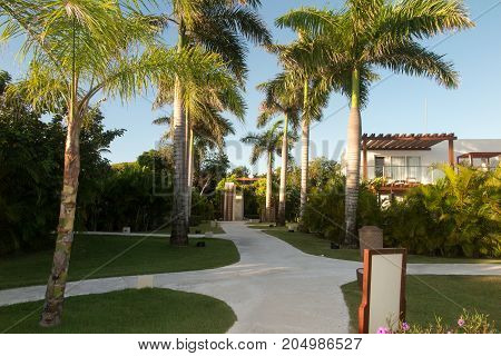 Palm Trees And Footway In Tropical Garden On Sea Coast