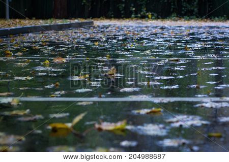 Yellow Leaves Floating On Wet Asphalt In Autumnal Rainy Forest