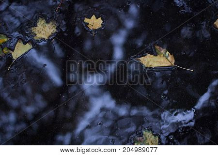 Yellow Leaves Floating On Wet Asphalt In Autumnal Forest