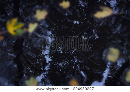 Yellow Leaves On Wet Asphalt In Autumnal Forest