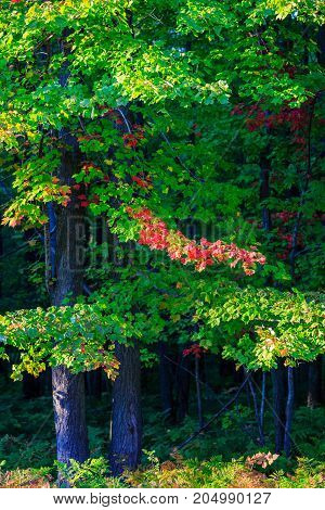 Wisconsin forest starting to turn colorful in early autumn