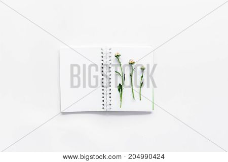 Floral composition. Buds and leaves on notebook on white background top view.