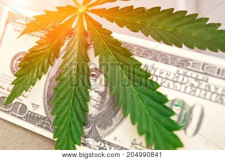 Sheet Of Marijuana. Money With Marijuana Leaves Close. Hemp With Money. Marijuana Leaves On A Stack