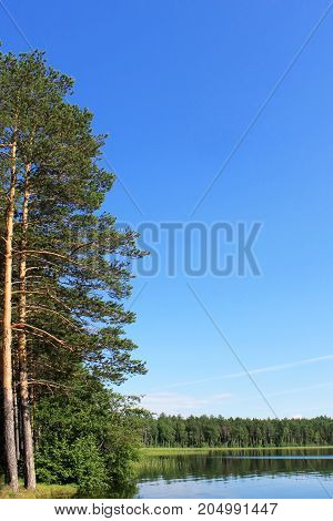 landscape blue sky over the lake coniferous forest on the shore