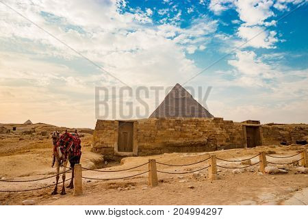 Camel rests near ruins of pyramid in Cairo, Egypt