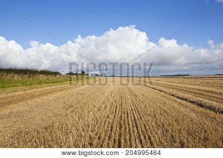 Wheat Stubble Fields