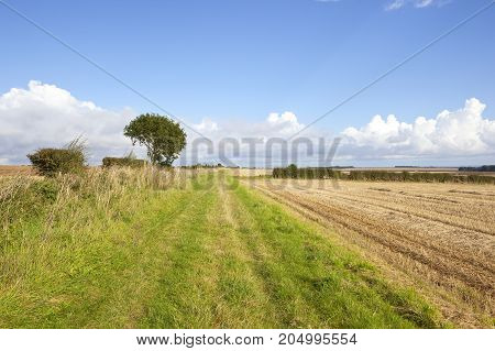 Bridleway And Wheat Stubble