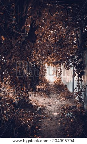 autumn alley in one of the cities of Russia