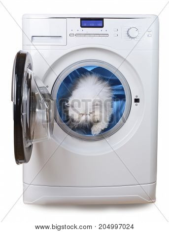 white Persian cat purity symbol inside laundry washing machine