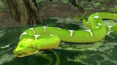 amazon python in water poster