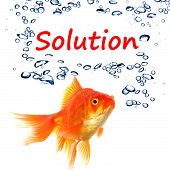 solution word and goldfish showing business problem or success concept poster