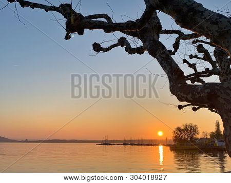 Lake and trees silhouette at sunset
