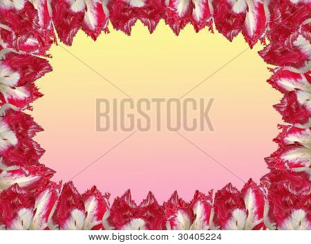 Frame With The Red-white Tulips, Isolated On A  Yellow And Pink Background.