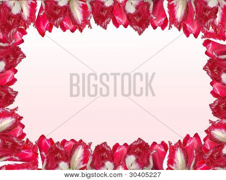Frame With The Red-white Tulips, Isolated On A White And Pink Background.