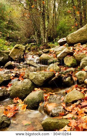 Beautiful Creek In Forest