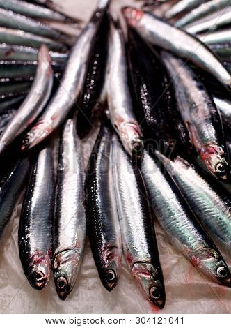 Arrangement Of Perfect Raw Fresh Sardines Closeup On Parchment Paper. Focus On Foreground