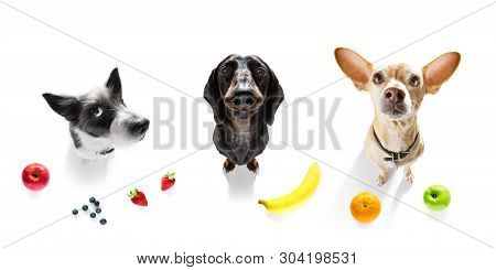 Group Row Of Dogs  With Guilty Conscience  For Overweight, And To Loose Weight ,isolated On White Ba