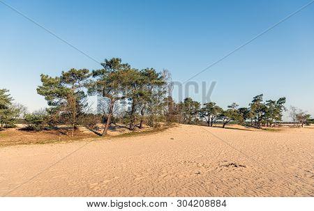 Loonse And Drunense Dunes