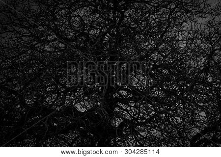 Dead Tree And Branch On White Background. Black Branches Of Tree. Disorganized Tree Branches. Tangle