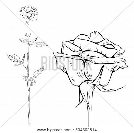 Rose Line Art Silhouette. Single Long Stem Rose Flower. Vector Illustration.