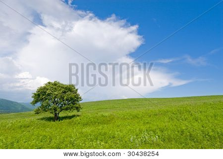 Lonely tree. Foothills.