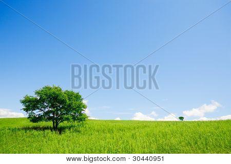 Two trees in an open field