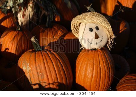 Freindly Face In A Pumpkin Patch