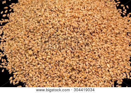 Wheat Close-up. Wheat Grains On A Black Background. Durum Wheat. Grain Crop. Sowing Or Harvesting Gr