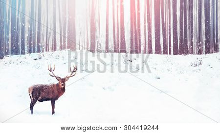 Noble deer on a background of a winter fairy forest. Snowfall. Christmas holiday image. Winter wonderland. poster