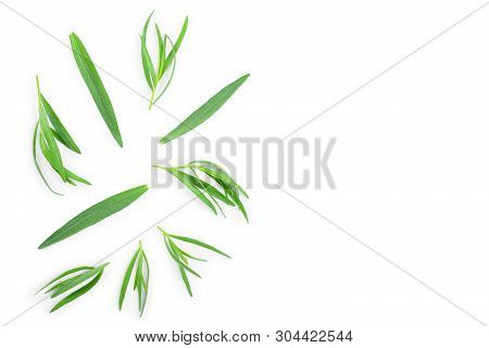 Tarragon Or Estragon Isolated On White Background With Copy Space For Your Text. Artemisia Dracuncul